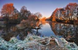 与一条河的冷的秋天早晨在白俄罗斯 河和孤独的被染黄的橡木的全景 太阳illumin的第一光芒 库存照片