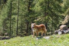与一条狗的好的遭遇在远足在山期间 库存照片