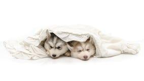 与一条白色毯子的逗人喜爱的小狗 免版税库存照片