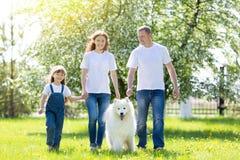 与一条白色狗的愉快的家庭在夏天公园 库存图片