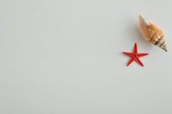 与一条红色星鱼的一个贝壳 免版税库存图片