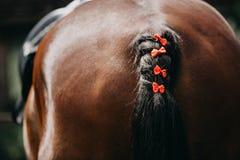 与一条结辨的尾巴的马参加超越障碍马术比赛的 库存图片