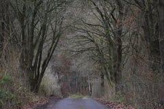 与一条美丽的大道的秋天风景与大树在一个小村庄在卡塞尔,德国 图库摄影