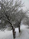 与一条美丽的大道的积雪的风景与大树在一个小村庄在卡塞尔,德国 免版税库存照片