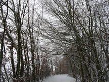 与一条美丽的大道的积雪的风景与大树在一个小村庄在卡塞尔,德国 库存照片