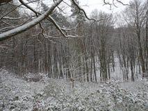 与一条美丽的大道的积雪的风景与大树在一个小村庄在卡塞尔,德国 免版税图库摄影