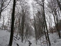 与一条美丽的大道的积雪的风景与大树在一个小村庄在卡塞尔,德国 图库摄影