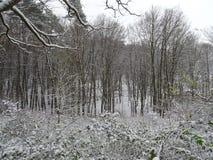 与一条美丽的大道的积雪的风景与大树在一个小村庄在卡塞尔,德国 库存图片