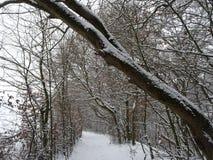 与一条美丽的大道的积雪的风景与大树在一个小村庄在卡塞尔,德国 免版税库存图片