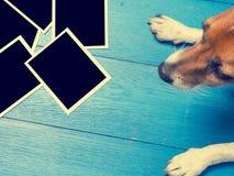 与一条逗人喜爱的狗的老照片框架 免版税库存照片