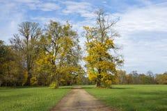 与一条道路的秋天风景树之间在蓝天下 免版税图库摄影