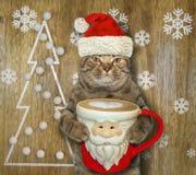 与一杯圣诞老人项目咖啡的猫4 免版税图库摄影