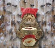 与一杯大咖啡的猫2 免版税库存图片