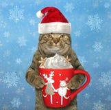 与一杯大咖啡的猫2 免版税库存照片