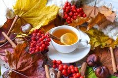 与一杯茶的秋天照片、五颜六色的叶子、灰莓果、栗子、一条温暖的围巾和肉桂条 免版税图库摄影