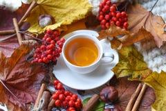 与一杯茶的秋天照片、五颜六色的叶子、灰莓果、栗子、一条温暖的围巾和肉桂条 库存照片