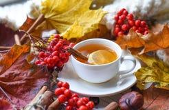 与一杯茶的秋天照片、五颜六色的叶子、灰莓果、栗子、一条温暖的围巾和肉桂条 图库摄影