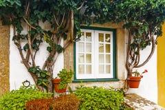与一株大竺葵的一个窗口在砖门面 库存图片