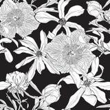 与一株木兰和牡丹花的图象的无缝的花卉样式在黑背景 库存例证