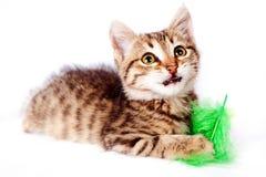 与一根绿色羽毛的小猫戏剧 免版税图库摄影