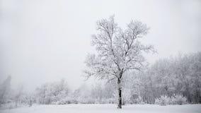 与一棵分隔的多雪的树的冷淡的冬天风景 图库摄影
