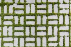 与一棵发芽的草的样式 免版税库存照片