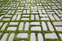 与一棵发芽的草的样式v 库存照片