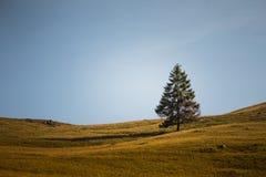 与一棵唯一杉树的一处美好的喀尔巴阡山脉的风景 免版税库存照片