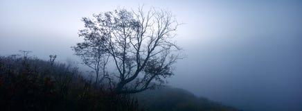 与一棵唯一树的神秘的有雾的风景在伏尔加河的银行,全景 免版税库存照片