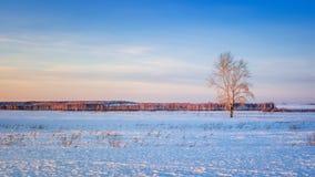 与一棵孤立树和一个森林天际的,俄罗斯,乌拉尔的冬天领域 免版税库存照片