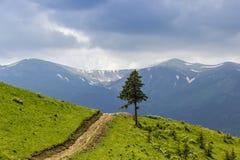 与一棵孤立树的喀尔巴阡山脉的风景 免版税库存图片