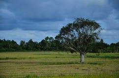 与一棵孤立树的多云天空 免版税库存图片