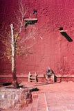 红色墙壁树 免版税库存图片