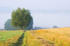 与一棵孤立树的风景在雾 图库摄影
