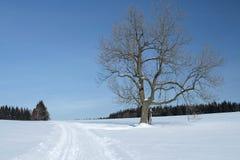 与一棵孤零零树的斯诺伊风景 免版税库存照片