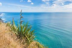 与一棵开花的草的美好的海风景 免版税图库摄影