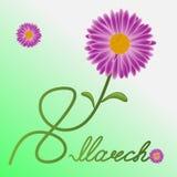 与一棵春黄菊的贺卡以八的形式在国际妇女` s天 库存例证