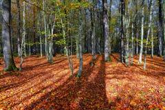 与一棵树和阴影的美好的晴朗的森林风景在草坪在一秋天天 免版税库存图片