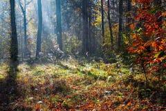 与一棵树和阴影的美好的晴朗的森林风景在草坪在一秋天天 库存图片