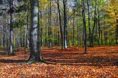 与一棵树和阴影的美好的晴朗的森林风景在草坪在一秋天天 库存照片