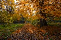 与一棵树和阴影的美好的晴朗的森林风景在草坪在一秋天天 免版税库存照片