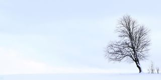 与一棵树的最低纲领派冬天风景在一个积雪的领域 库存照片