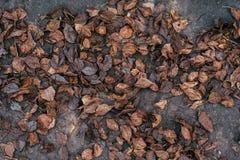 与一棵树的秋叶在泥的草 秋天秋天朋友生叶在结构天气木头之下 在地面上的很多棕色老叶子 背景 免版税库存照片