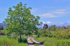 与一棵树的风景在路旁边 图库摄影