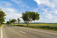 与一棵树的风景在路边缘 库存照片