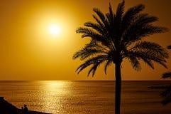与一棵棕榈树的美好的日落在特内里费岛 库存图片