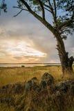 与一棵湖和树的多云日落在前景在澳大利亚 库存照片