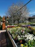 与一棵白色树的色的花处置作为背景 免版税库存图片
