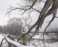 与一棵老杨柳的一根下落的树干的冬天风景 免版税库存图片
