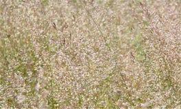 与一棵装饰背景草的宏观照片 图库摄影